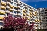 appartementen-met-boom